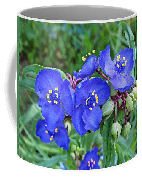 Coffee Mug featuring the photograph Tradescantia Blooming by MTBobbins Photography