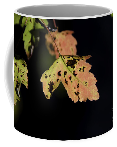 Maple Leaf Coffee Mug featuring the photograph Translucent Maple Leaf by Dale Powell
