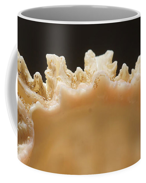 Africa Coffee Mug featuring the photograph Treasures Of The Ocean 1 by Rudi Prott