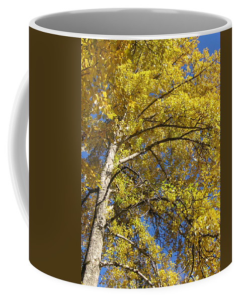 Yellow Tree Coffee Mug featuring the photograph Tree 4 by Kimberly Maxwell Grantier