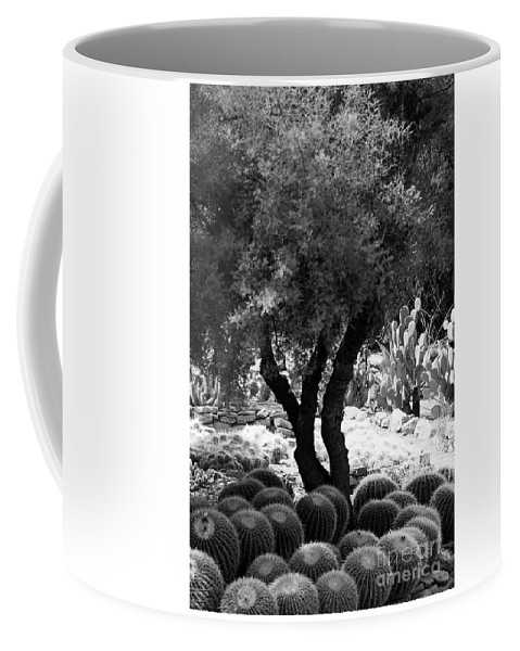 #tree # Cactus Coffee Mug featuring the photograph Tree And Cactus by Kathleen Struckle
