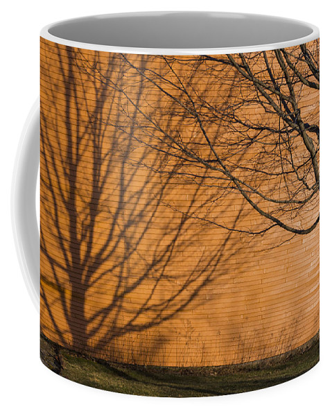 Orange Coffee Mug featuring the photograph Tree And Shadow At Cogswells Grant by David Stone