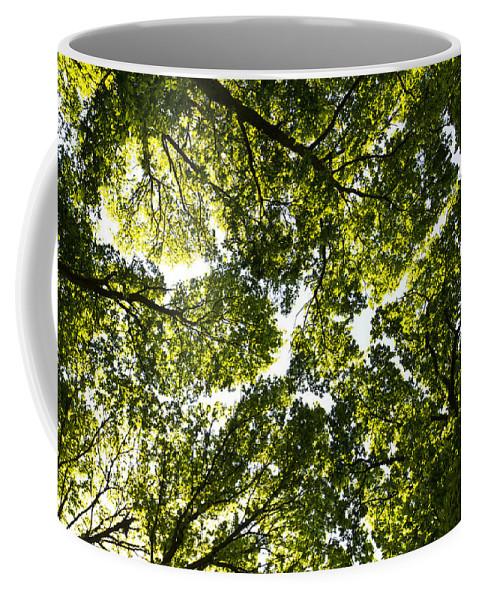 Tree Coffee Mug featuring the photograph Tree Canopy by David Pyatt