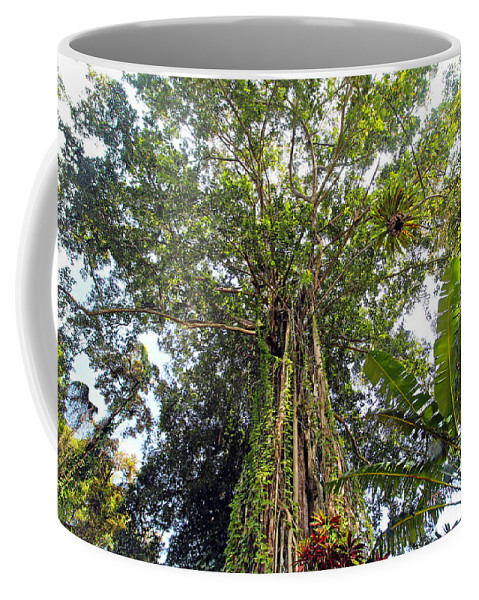 Canopy Coffee Mug featuring the photograph Tree Canopy by Paul Fell