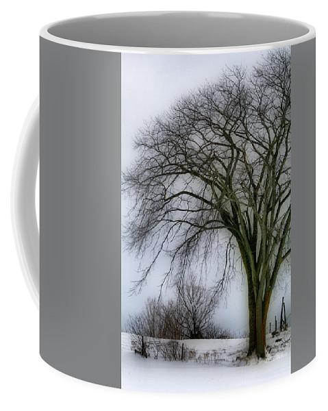 Tree Coffee Mug featuring the photograph Tree Elder by Deborah Benoit