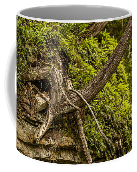 Ausable Chasm Ny Coffee Mug featuring the photograph Tree Grows From Rock Outcrop by Eric Swan