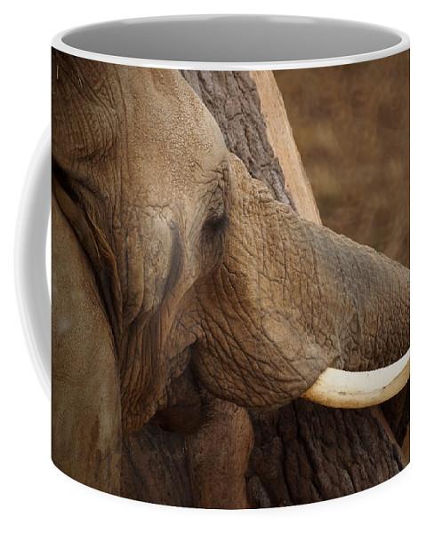 Tree Hugging Elephant Coffee Mug featuring the photograph Tree Hugging Elephant by Ernie Echols