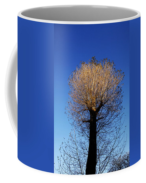 Autumn Coffee Mug featuring the photograph Tree In Afternoon Sunlight by Steve Ball