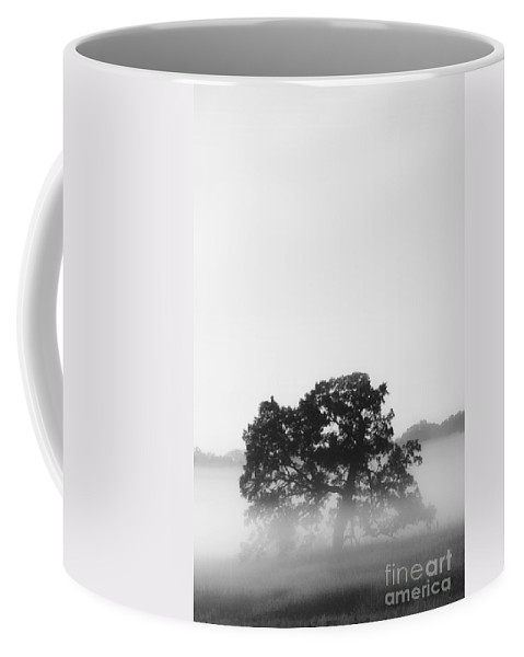 Tree Coffee Mug featuring the photograph Tree In Fog by Margie Hurwich