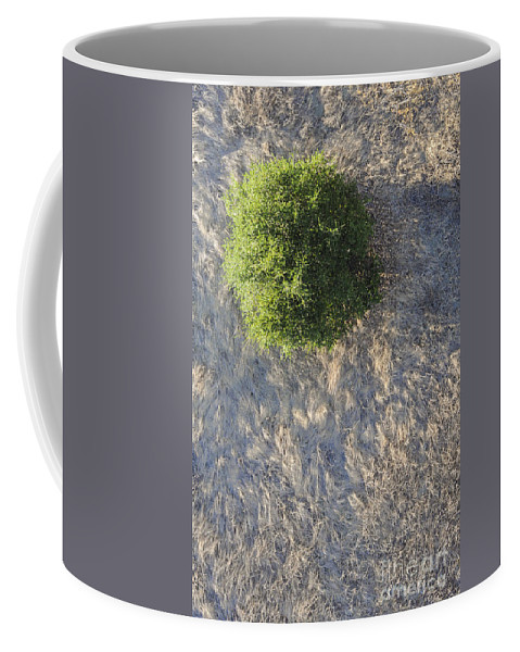 Napa Valley California Tree Trees Grass Grasses Texture Textures Coffee Mug featuring the photograph Tree In Grass From Balloon by Bob Phillips
