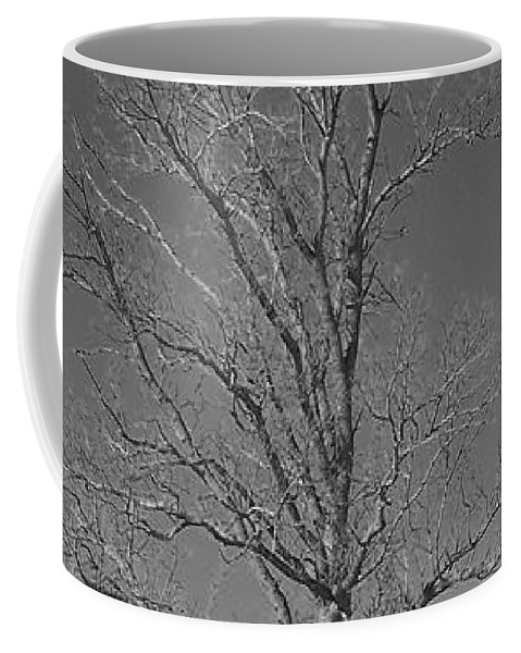 Tree Coffee Mug featuring the photograph Tree In Winter by Michelle Miron-Rebbe