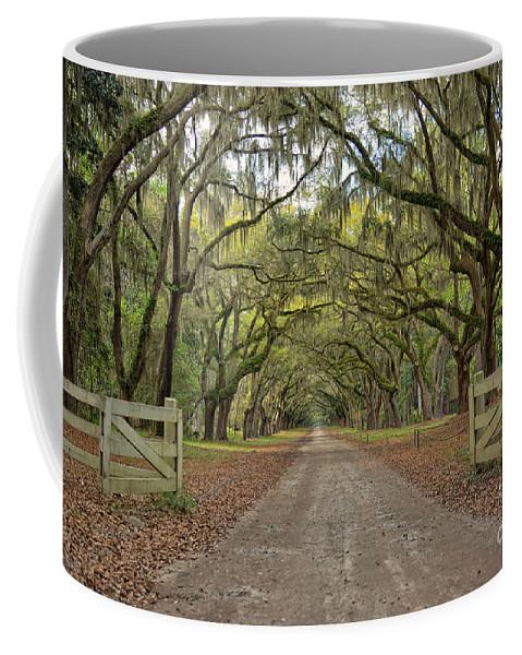 Georgia Coffee Mug featuring the photograph Tree Road by Brandon Hirt