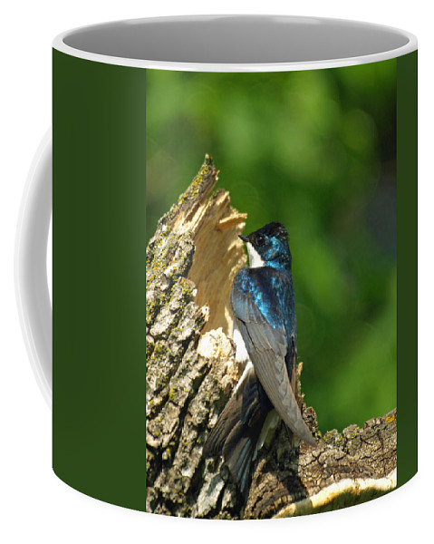 Vertical Coffee Mug featuring the photograph Tree Swallow by James Peterson