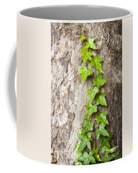 Tree Coffee Mug featuring the photograph Tree Vine by Tim Hester