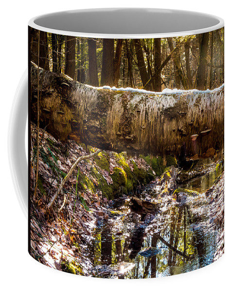 New England Coffee Mug featuring the photograph Tree Walk by DAC Photography
