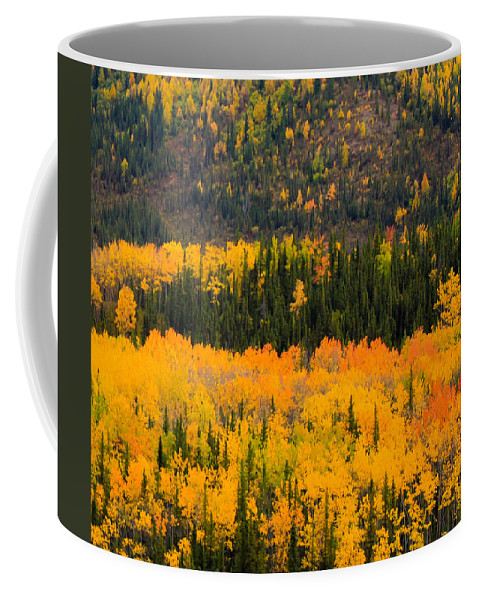 Fall Coffee Mug featuring the photograph Trees Ablaze by Kevin Buffington