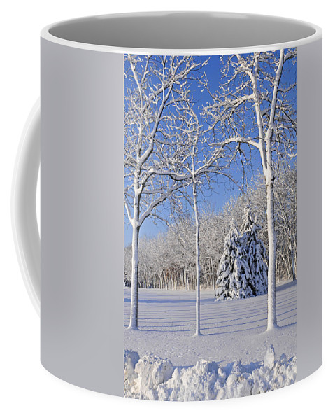No People; Vertical; Outdoors; Day; Winter; Snow; Landscape; Tree; Tranquil Scene; Scenics; Beauty In Nature; Travel; Clear Sky; Usa; Wisconsin; Bare Tree Coffee Mug featuring the photograph Trees In Snow Wisconsin by Anonymous