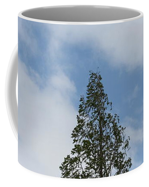 Tree Coffee Mug featuring the photograph Treetop by Michelle Miron-Rebbe