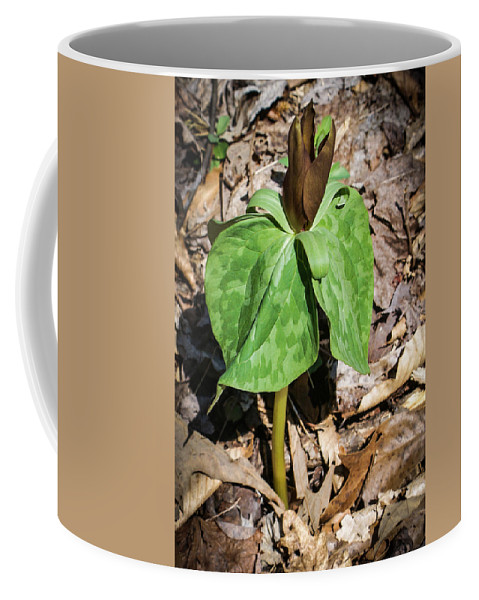 Trillium Coffee Mug featuring the photograph Trillium In The Spring by Douglas Barnett