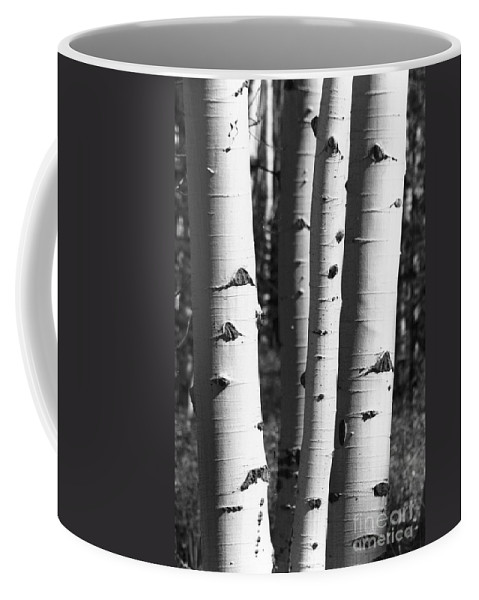 Aspens Coffee Mug featuring the photograph Triple Aspens by Brandi Maher