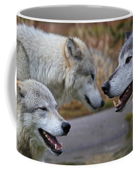Wolves Coffee Mug featuring the photograph Triple Take by Athena Mckinzie