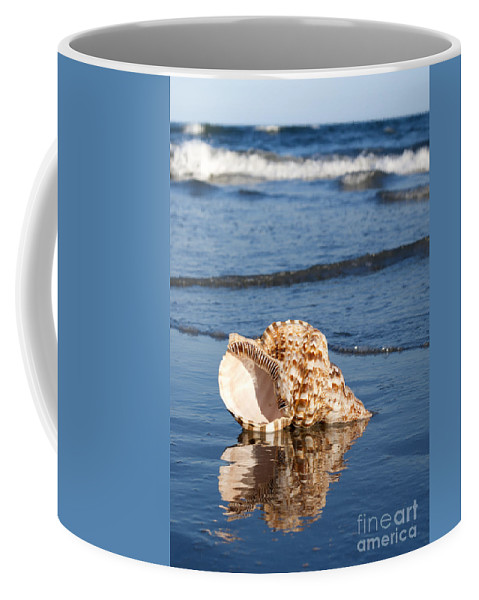 Triton Coffee Mug featuring the photograph Triton Seashell by Anthony Totah