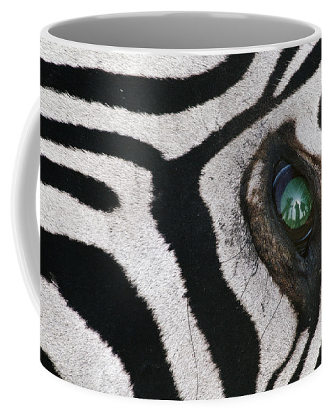 Animal Behavior Coffee Mug featuring the photograph Trophy Hunter In Eye Of Dead Zebra by Frans Lanting MINT Images