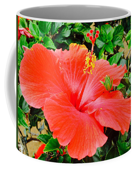 Flower Coffee Mug featuring the photograph Tropical Explosion by Kris Hiemstra