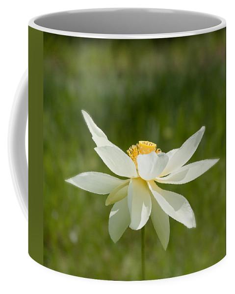 Lotus Coffee Mug featuring the photograph Tropical Lotus Flower by Kim Hojnacki
