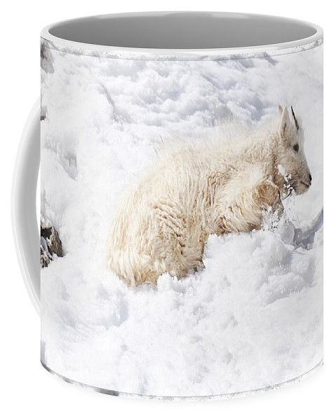 Alpine Coffee Mug featuring the photograph Trying To Find The Next Rock by Image Takers Photography LLC - Carol Haddon