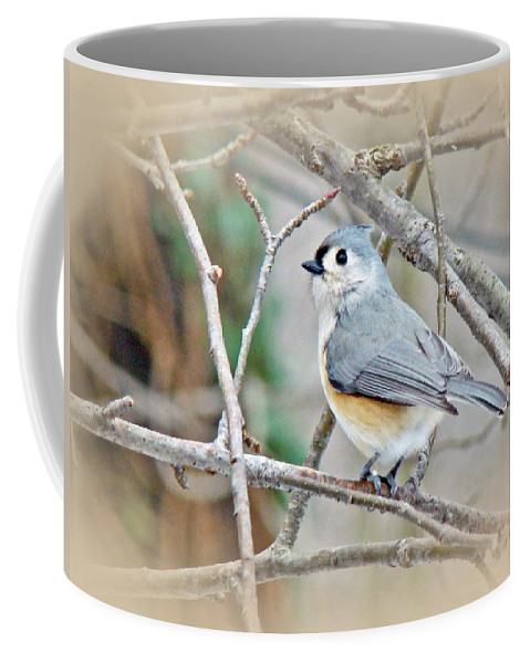 Titmouse Coffee Mug featuring the photograph Tufted Titmouse - Baeolophus Bicolor by Mother Nature