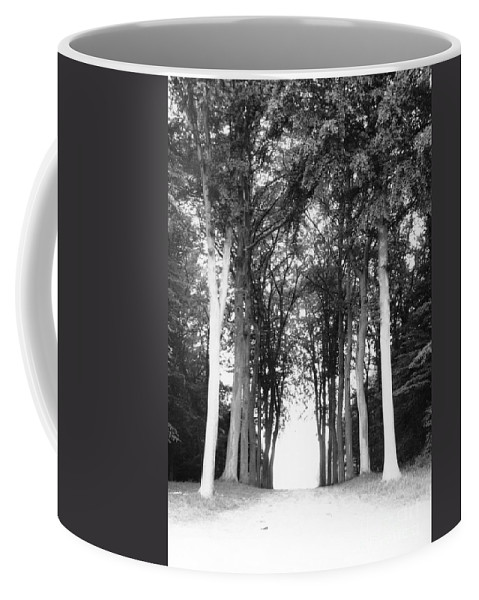 Trees Coffee Mug featuring the photograph Tunnel Of Trees by Christine Jepsen