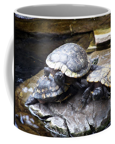 Turtles Coffee Mug featuring the photograph Turtle Rant by Cornelia DeDona