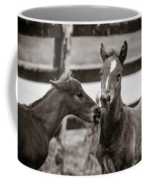 Kentucky Coffee Mug featuring the photograph Two Colts by Alexey Stiop