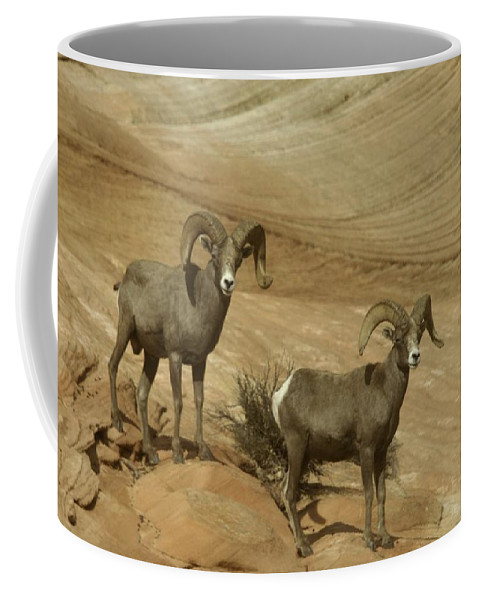 Horns Coffee Mug featuring the photograph Two Male Rams At Zion by Jeff Swan