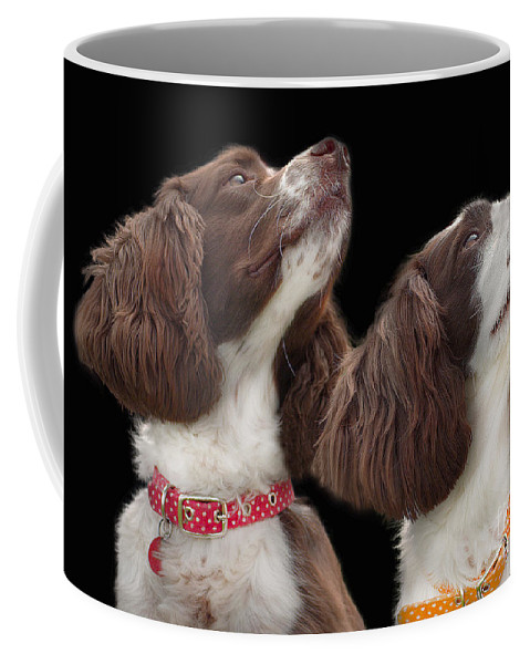 Black Background Coffee Mug featuring the photograph Two Spaniels by Linsey Williams