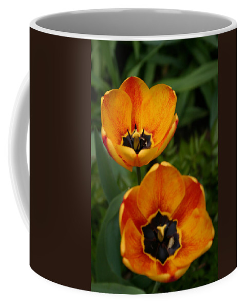 Denyse Duhaime Photography Coffee Mug featuring the photograph Two Tulips by Denyse Duhaime