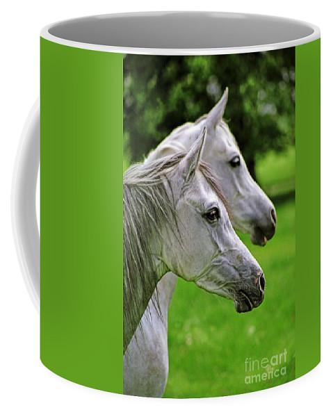 Horse Coffee Mug featuring the photograph Two White Arabian Mares by Angel Ciesniarska