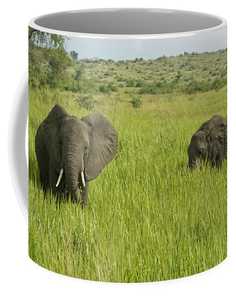 Elephant Coffee Mug featuring the photograph Ugandan Elephants by Brian Kamprath