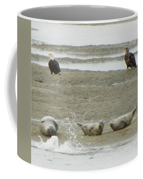 Seals Coffee Mug featuring the photograph Unbelievable by Gallery Of Hope