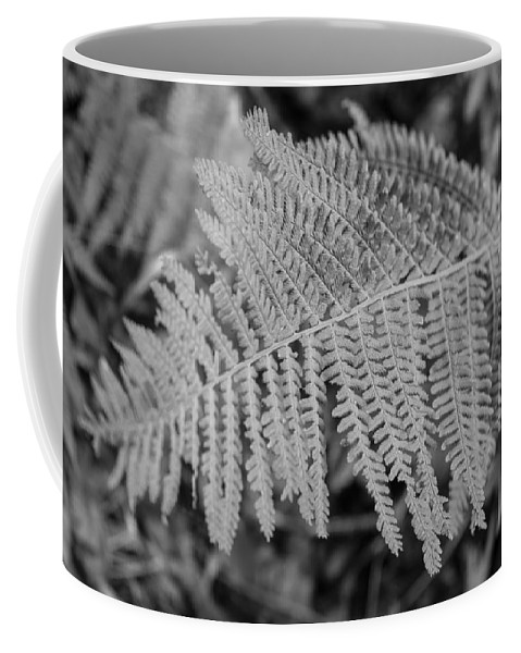 Miguel Coffee Mug featuring the photograph Underneath Trees by Miguel Winterpacht
