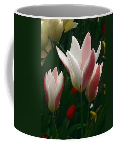 Tulip Coffee Mug featuring the photograph Unfolding Tulips by Nancy Griswold