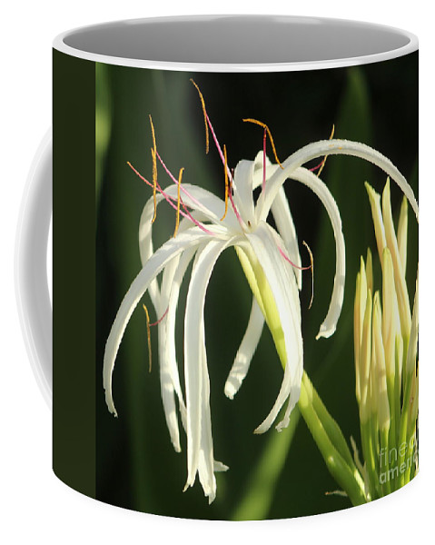 White Coffee Mug featuring the photograph Beauty All Around Us by Fiona Kennard