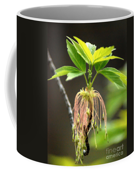 Pink Flower Coffee Mug featuring the photograph Unknown Tree Flower by Optical Playground By MP Ray