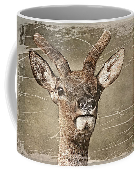 Deer Coffee Mug featuring the photograph Up Close And Personal by Teresa Zieba