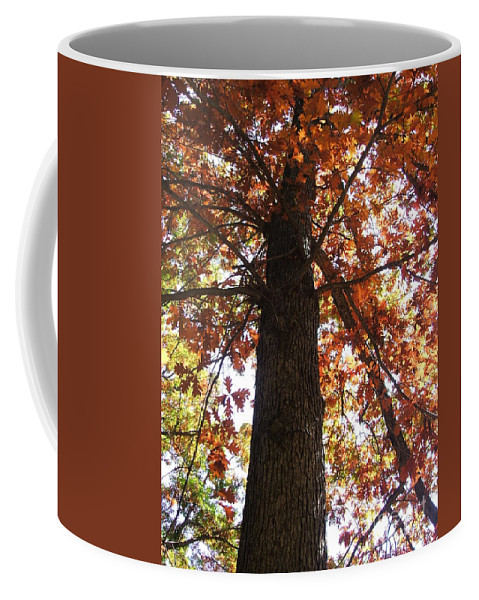 Tree Coffee Mug featuring the photograph Up Fall by Minding My Visions by Adri and Ray