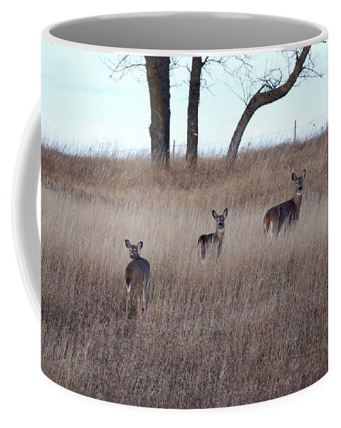 Deer Coffee Mug featuring the photograph Up The Hill by Lori Tordsen