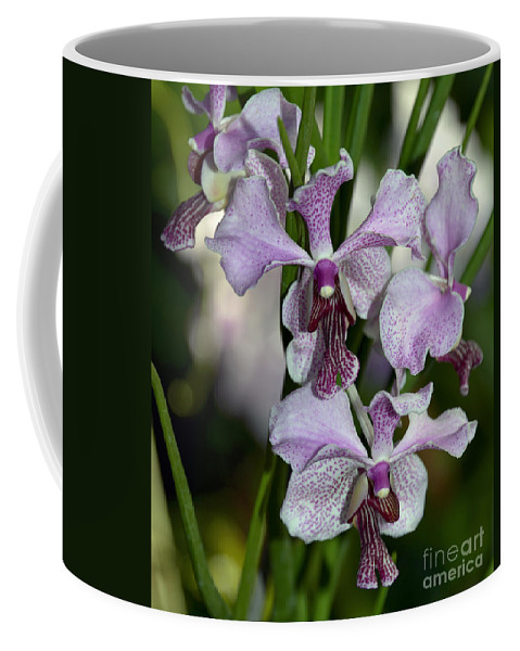 Orchid Coffee Mug featuring the photograph Vanda Emma Van Derventer 6906 by Terri Winkler
