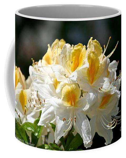 Flower Coffee Mug featuring the photograph Vanilla Butterscotch by Susan Herber