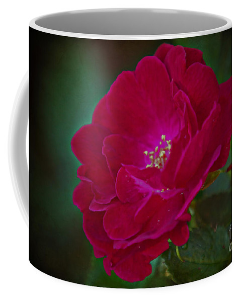 Red Rose Coffee Mug featuring the photograph Velvet Rose by Elizabeth Winter